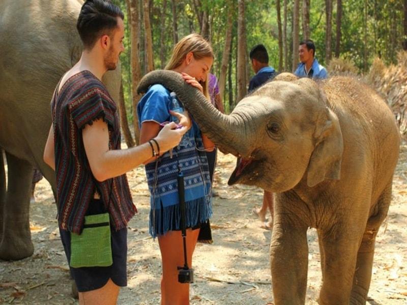 Nordthailands højdepunkter og badeferie på Koh Kood