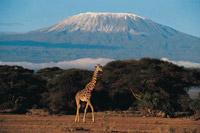 10 Dage – Kilimanjaro Bestigning ad Macharme ruten