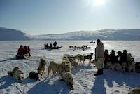 Firmarejser til Grønland