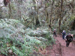 Den første vandredag går primært op gennem regnskoven.