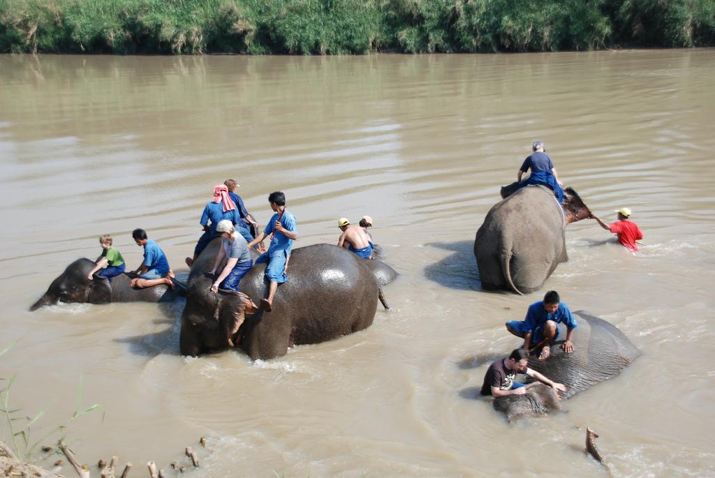 Elefant badning i Kanchanaburi