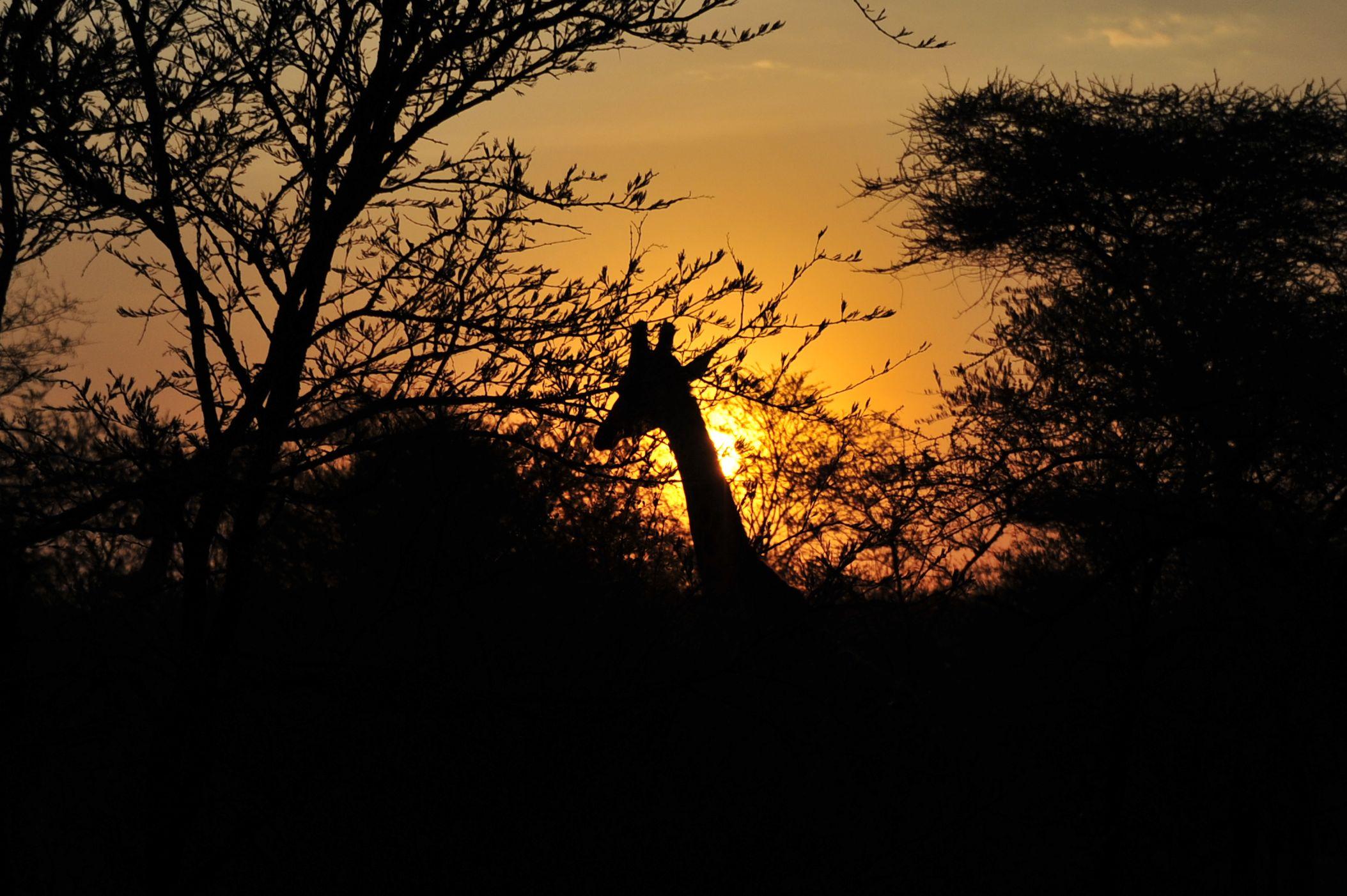 Safari - 5 dage: Serengeti, Ngorongoro & Tarangire