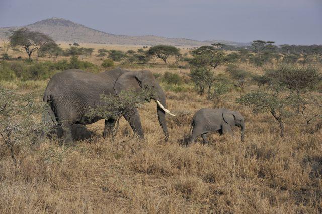 Safari - 3 dage: Ngorongoro & Tarangire / Lake Manyara