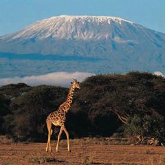 Bestigning af Kilimanjaro