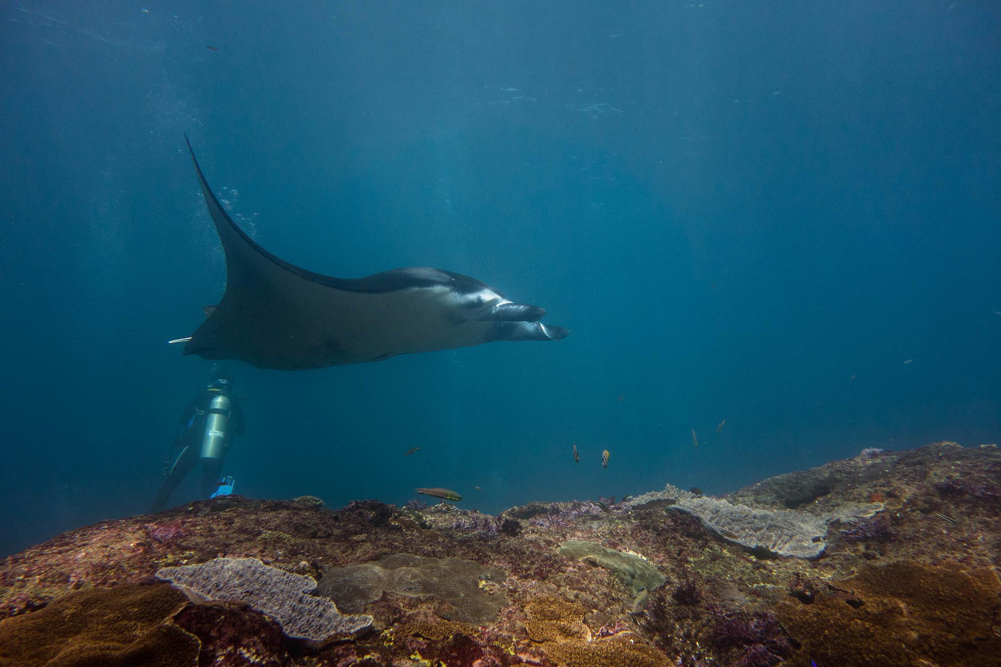 Dykning ved Gili øerne