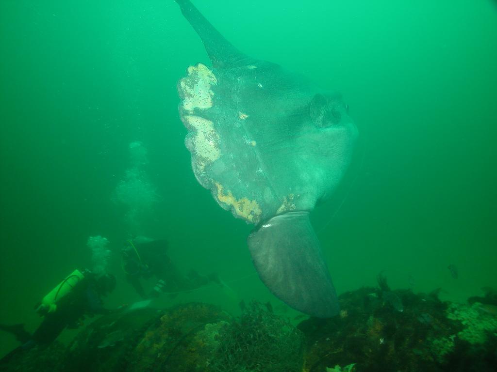 Solfish