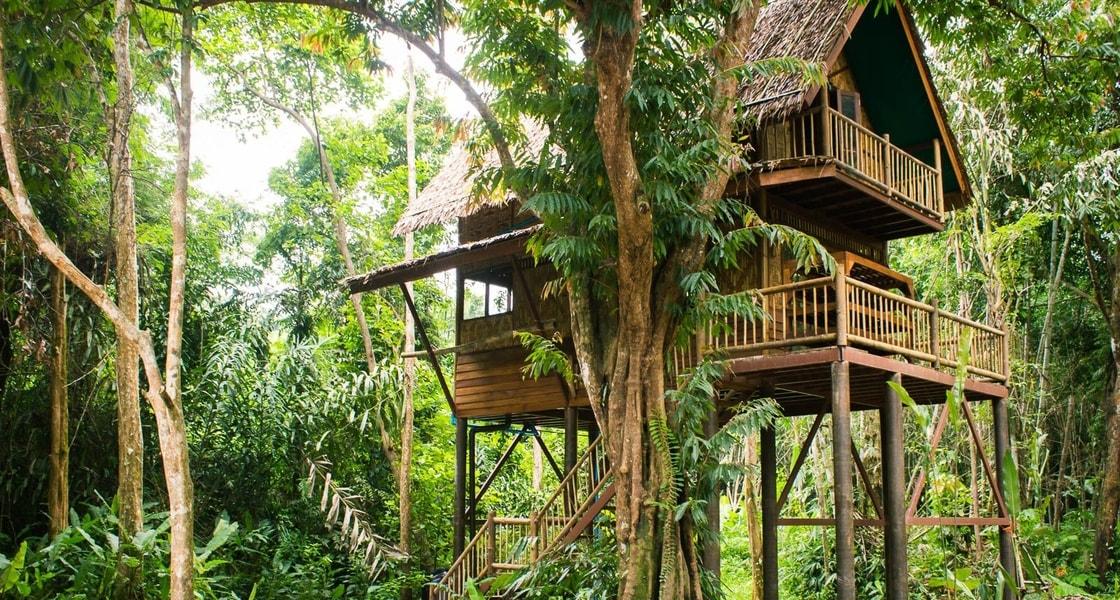 our jungle camp khao sok